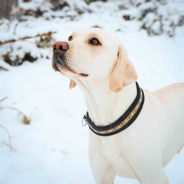 Bilde av Halsbånd hund